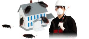 كيفيةمكافحة الحشراتالمنزلية