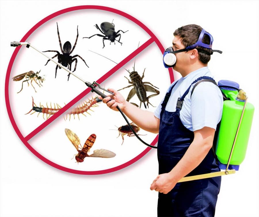 Photo of رش المبيدات بالرياض