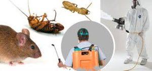 شركة مكافحة الحشرات في الرياض